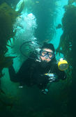 Underwater Photographer in Catalina Vertical — 图库照片