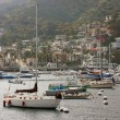 Avalon Bay with Boats in Catalina - 图库照片
