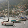 Avalon Bay with Boats in Catalina - Stock fotografie