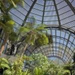 Arboretum in Balboa Park — Stock Photo #14498419