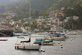 Avalon Bay with Boats in Catalina — Stock Photo