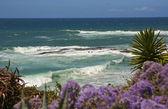 Laguna Beach Wave and Flowers — Stock Photo