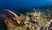 St. Lucia Reef Wide Angle — Stock Photo