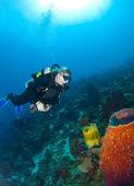 Potápěč při pohledu na houby v usti nad orlici — Stock fotografie