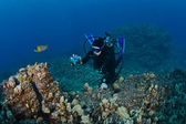 Scuba Diver taking a shot of the Reef — Stockfoto
