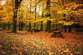 Autumn landscape with beautiful colored trees and benches — Stok fotoğraf