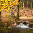 Autumn river at the park with beautiful yellow trees foliage — Stock Photo #12948735