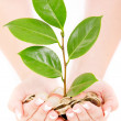 Woman hands holding coins and plant over white background — Stock Photo