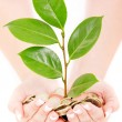 Woman hands holding coins and plant over white background — Stock Photo #13648148