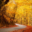 Autumn landscape with road and beautiful colored trees — Stock Photo #13649494