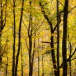 Colorful autumn trees background — Stock Photo
