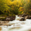 Autumn river at the park with beautiful yellow trees foliage — Stock Photo #13649528