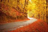 Paisaje otoñal con la carretera y hermosos árboles colores — Foto de Stock