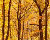 Beautiful autumn trees foliage at the forest — Stock Photo