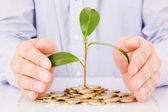 Business man hands with a tree growing from pile of coins — Stock Photo