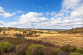Alentejo landscape with trees and beautiful sky — Stock Photo
