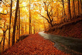 Autumn landscape with road and beautiful colored trees — Stock Photo