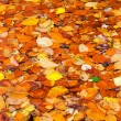 Photo: Colorful autumn leaves background.