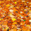 Foto Stock: Colorful autumn leaves background.