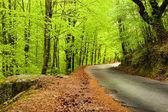 Paesaggio primaverile con la strada e bellissimi alberi verdi — Foto Stock