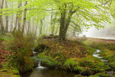 Beautiful small river flowing by the forest during the Spring se — Stock Photo