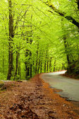 Spring landscape with road and beautiful green trees — Stock Photo