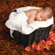 Stock Photo: Adorable baby boy sleeping in basket