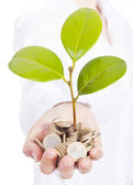 Green plant sprouting from a hand with money, isolated on white — Stock Photo