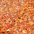 Autumn leaves background, outdoor shot — Stock Photo