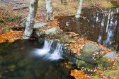 Autumn landscape with fallen leaves and river — Stock Photo