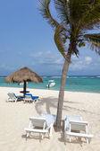 Idyllic beach with coconut tree — Stock Photo