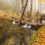 Autumn landscape — Stock Photo #35641145