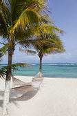 Idyllic beach with coconut trees and hammock at Mexico — Stok fotoğraf