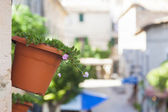 Typical flowery street — Stock Photo