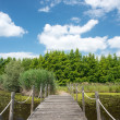 Wooden lake bridge in summer season — Stock Photo #28243477