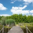Wooden lake bridge in summer season — Stock Photo