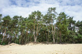 Forest and sand — Stock Photo
