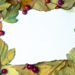 Paper on autumn leaves — Stock Photo #33750543