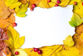 Paper on autumn leaves — Stock Photo