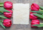 Tulips and paper with copy space — Stok fotoğraf