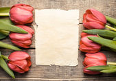 Tulips and paper with copy space — Stock fotografie