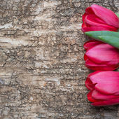 Red tulips on wooden background — Stock Photo