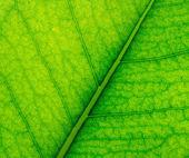 φόντο πράσινο φύλλο — Stockfoto