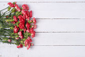 Bouquet of red carnation flowers — Stock Photo