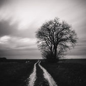 Lonely tree in a field — Stock Photo