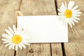 Frame with daisies — Stock Photo