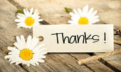 Thanks and daisies — Stock Photo