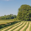 Stockfoto: Newly mown grass