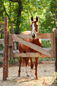 Ginger horse on farm. Outdoors — Стоковое фото