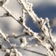 Close up of dry grass under snow — Stock Photo